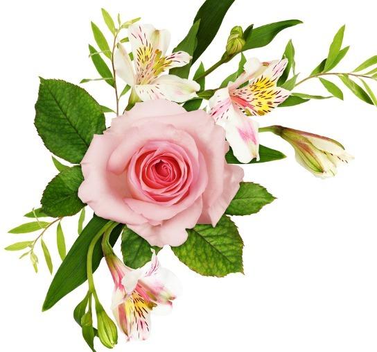 【草丁图书馆】3月下旬开始,4属相喜事临门,接财接福接桃花,生活锦上添花
