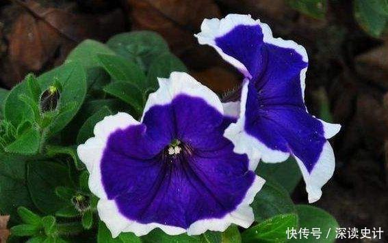 几款开花小巧玲珑的花卉,随便一养开满盆,芳香满阳台