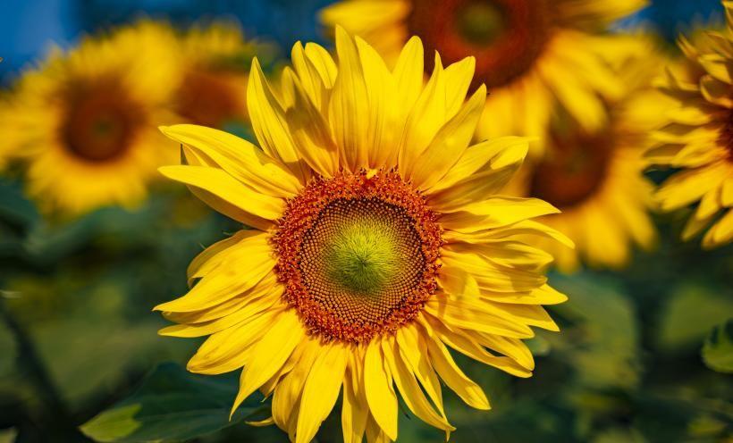 7天内喜鹊屋顶喳喳叫,桃花朵朵开,将牵手爱情的4大生肖!