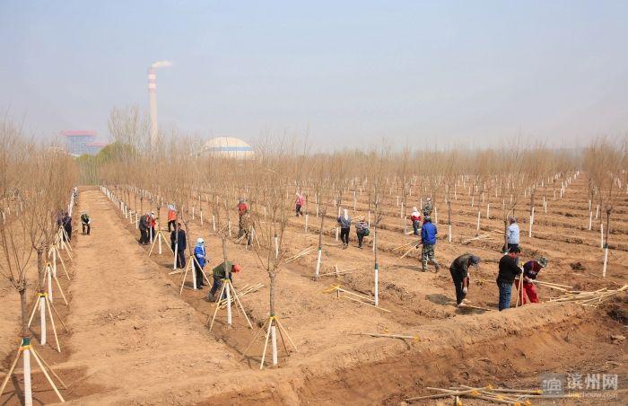 """滨州全面实施黄河淤背区绿化提升工程 打造""""多树种、景观美、"""