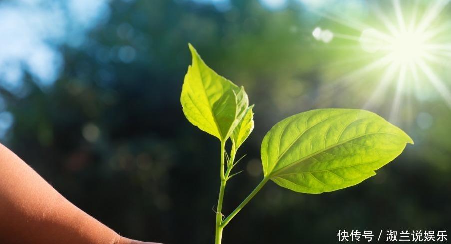 小花|养花不能用的3种土、4种水,不利于花卉生长,啥花都养不久
