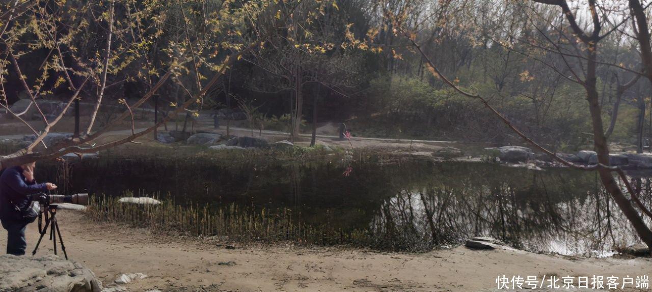 折花枝、插木棒、放食物……奧森公園南園又現不文明誘拍