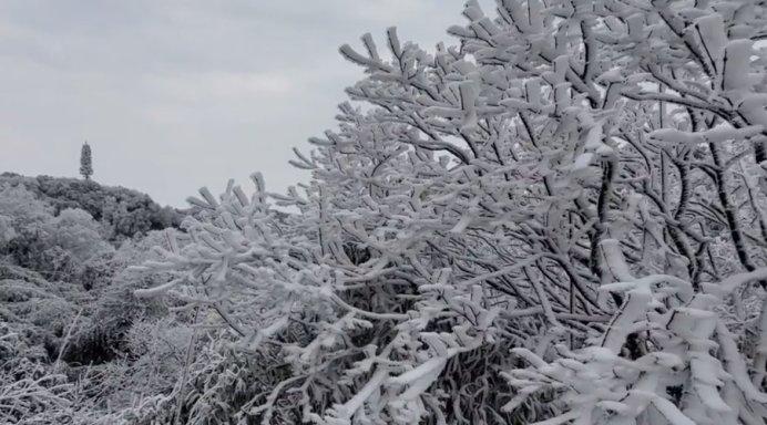 寒潮来袭,金佛山下雪啦