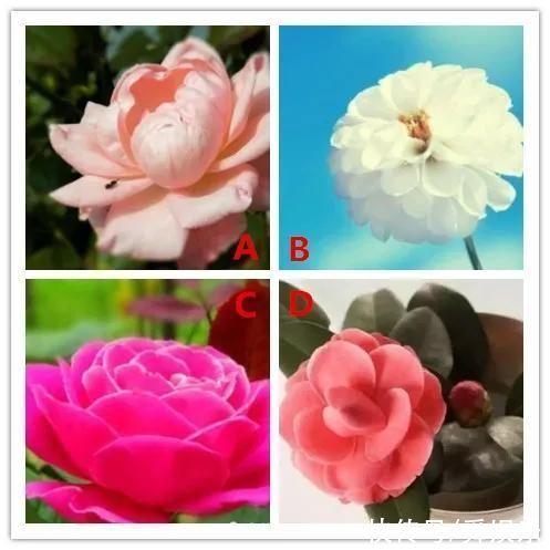 你第一眼喜歡哪朵花?測你下個月會收獲什麼?