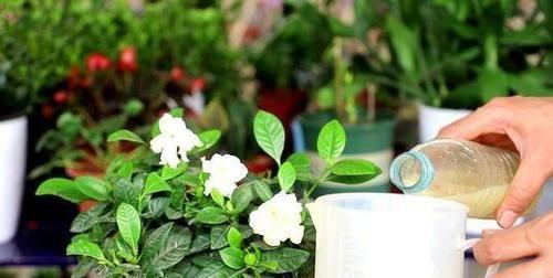 当植物长势不好时,别病急乱投医,早用尿素早解决问题