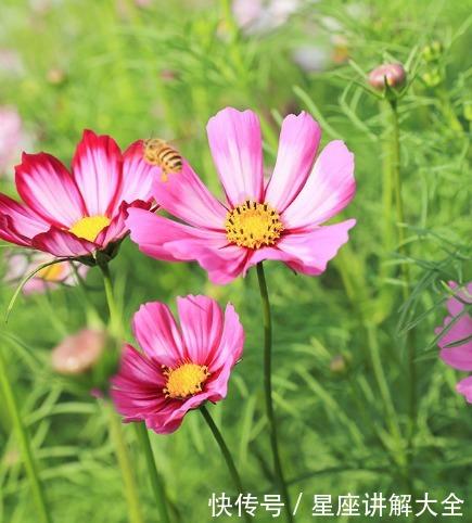 5月上旬,喜迎桃花,4屬相愛情甜蜜,日子紅紅火火,事業有成