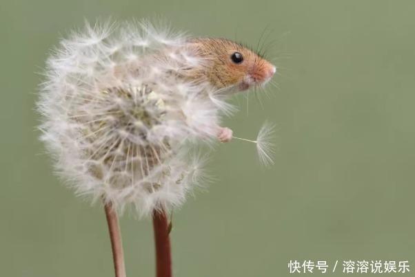生肖鼠的,名字里有什么字一生十有八九大富大贵!