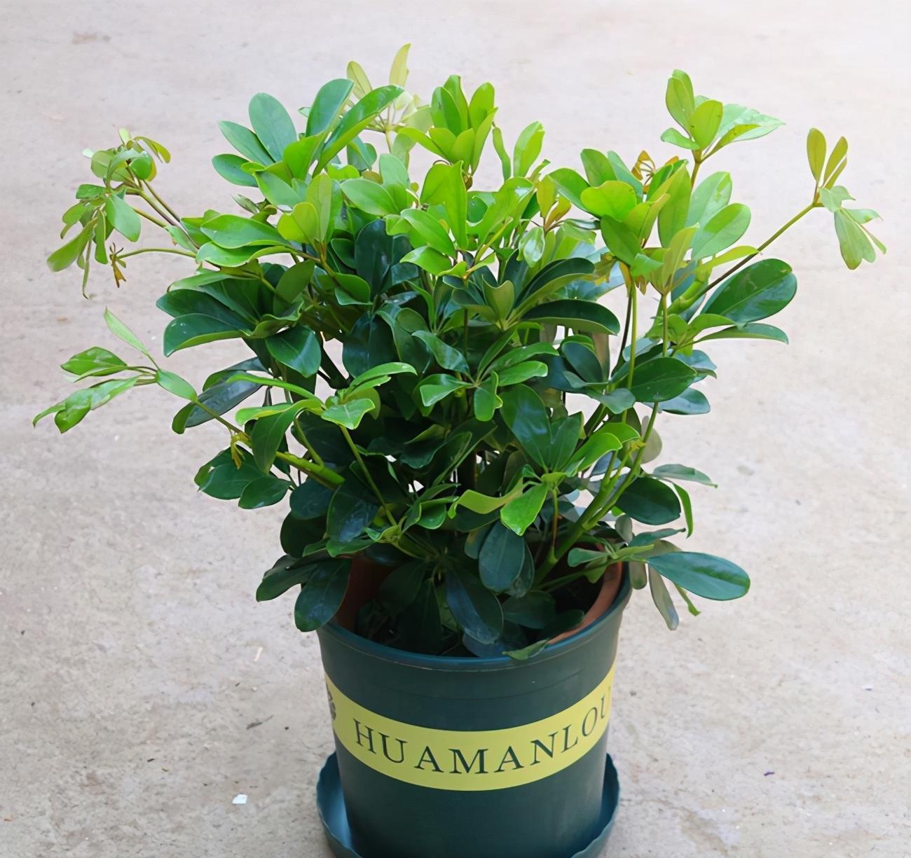 净化空气选什么植物,推荐这5种,各有绝招