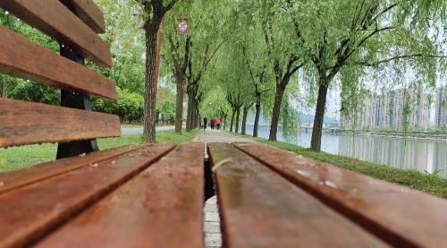 這裏柳樹成蔭,還新增休閒椅,大家可以過來看江景、發獃……