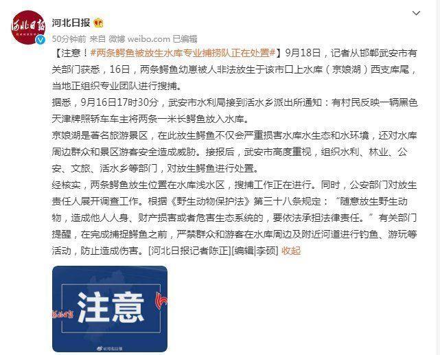 注意。两条鳄鱼非法放生于邯郸武安市,水库专业捕捞队正在处置