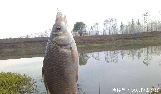 钓鱼不小看曲酒,这样使用,饵料、窝料诱鱼能力大幅度提升