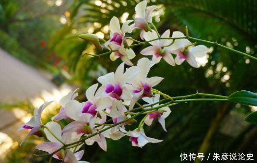 4种花适合新手养,不用费心,开起花来拦不住,美不胜收