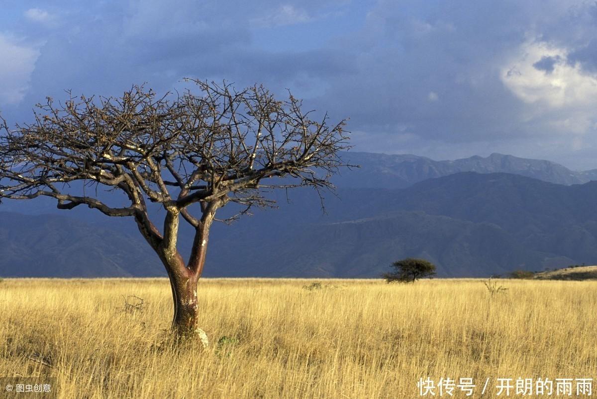 心理測試:哪棵樹最先發芽,測出你的後半輩子過得幸福嗎
