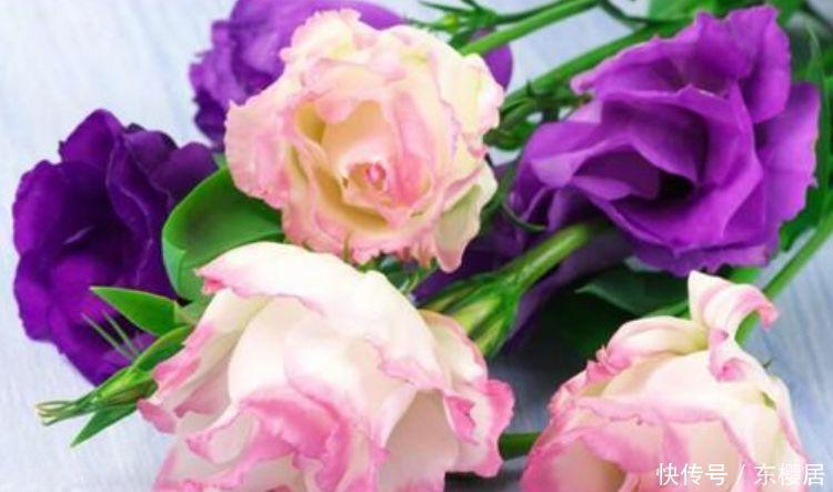4种富贵花,个个美出状态,花朵迷人美极了