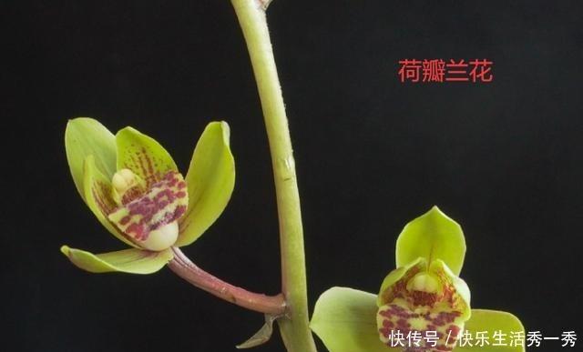 名贵兰花价值百万、千万,那什么兰花才算是名贵兰花!