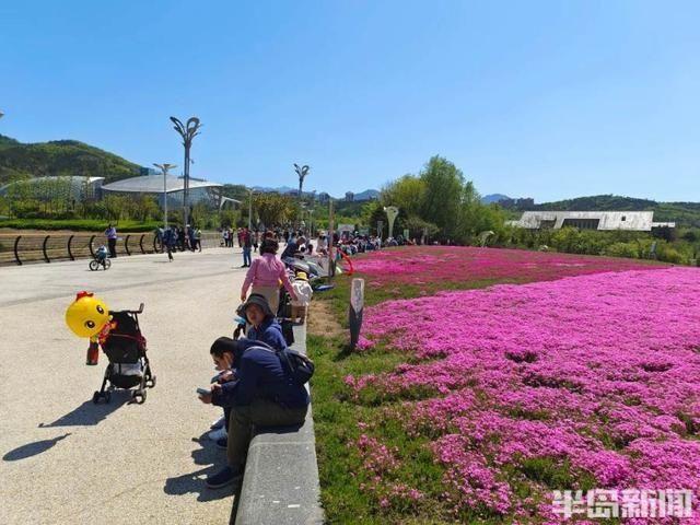 青岛世博园三天纳客五万,芝樱花海、水舞秀、植物馆成网红打卡地