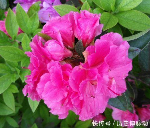 几款花卉好养易爆盆,花朵硕大迷人,还能散发阵阵清香