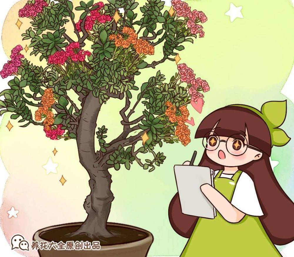 """4种""""超长寿""""的植物,家里有老人,一定要养!"""
