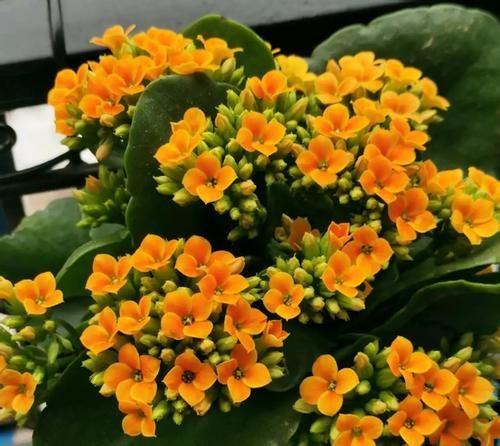 3月前后天气渐暖,养这几样植物,舍得撸叶子摘顶才能开花越漂亮