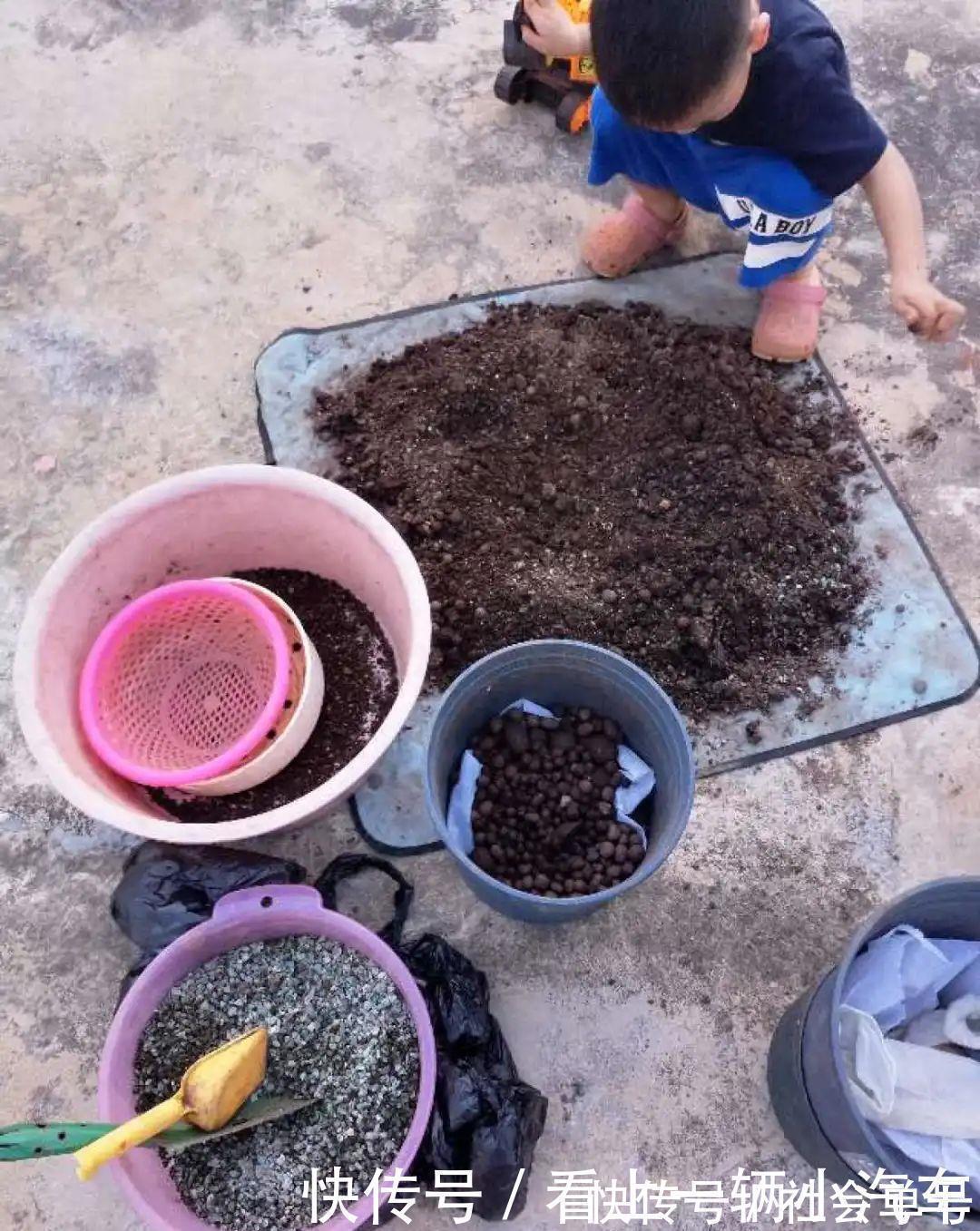 养花|养花技巧:花盆里出现这个,抓紧换盆,不然一浇水就死翘翘