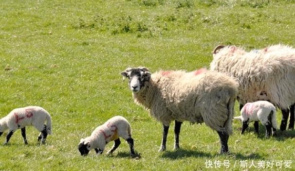 """生肖羊,你名字中若带有这些""""字"""",一生事业红火,衣食无忧!"""